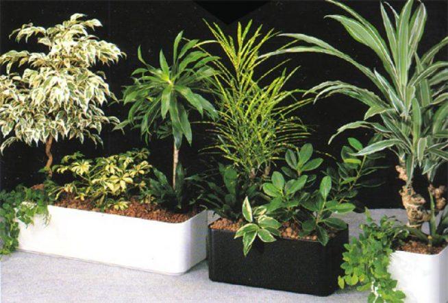 Используемые в фитодизайне растения