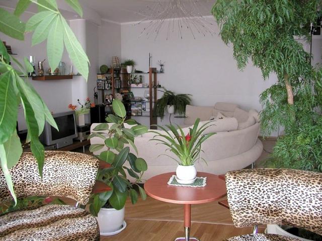 Фитодизайн в квартире