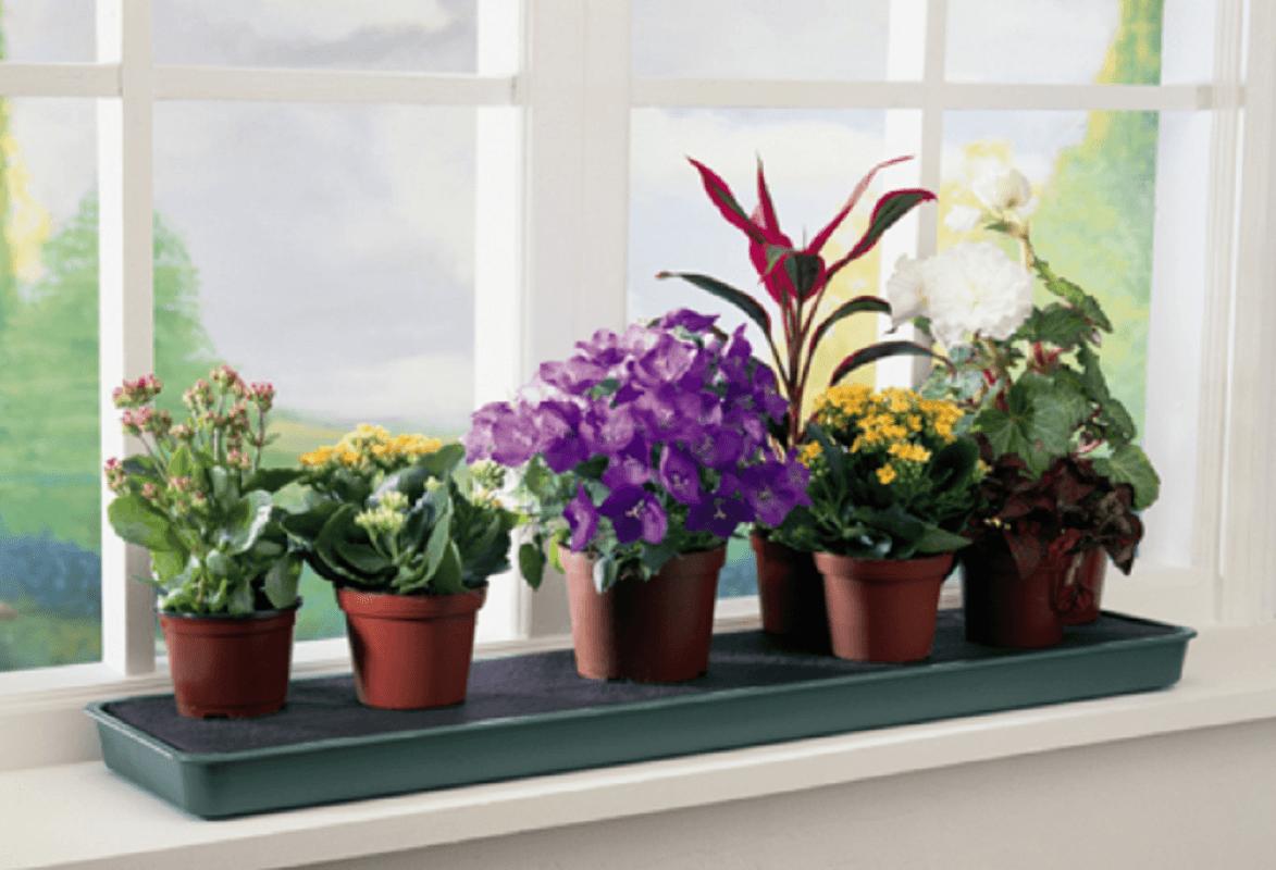 Почему в доме нельзя держать искусственные цветы