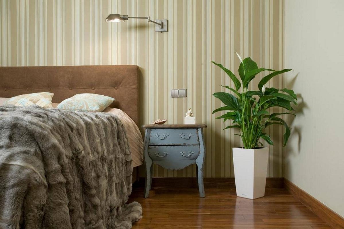 Цветы благоприятные для спальни названия и фото