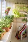 Небольшая лоджия с комнатными растениями