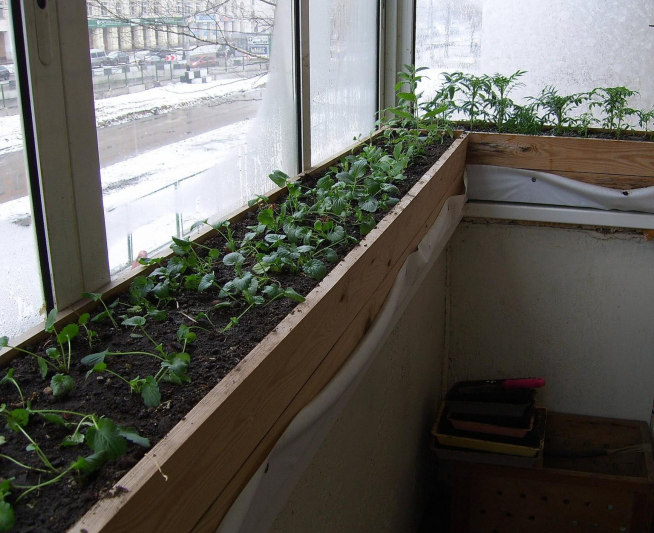 Ящики с рассадой на подоконнике балкона