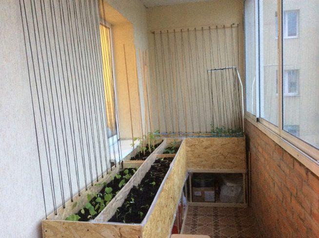 Ящики для вьющихся растений