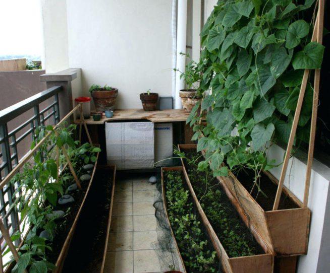 Стены балкона с лианными растениями