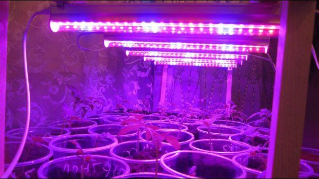 Подсветка рассады светодиодной лентой