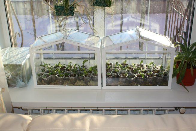 Комфортные теплицы для балкона