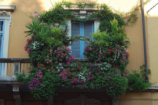 Оформление балкона лианами