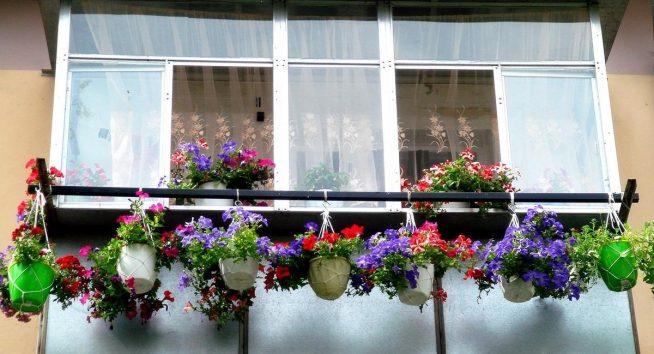 Озеленение застеклённого балкона
