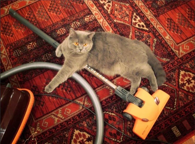 Как вывести запах кошачьей мочи:  6 эффективных способов, которые реально работают