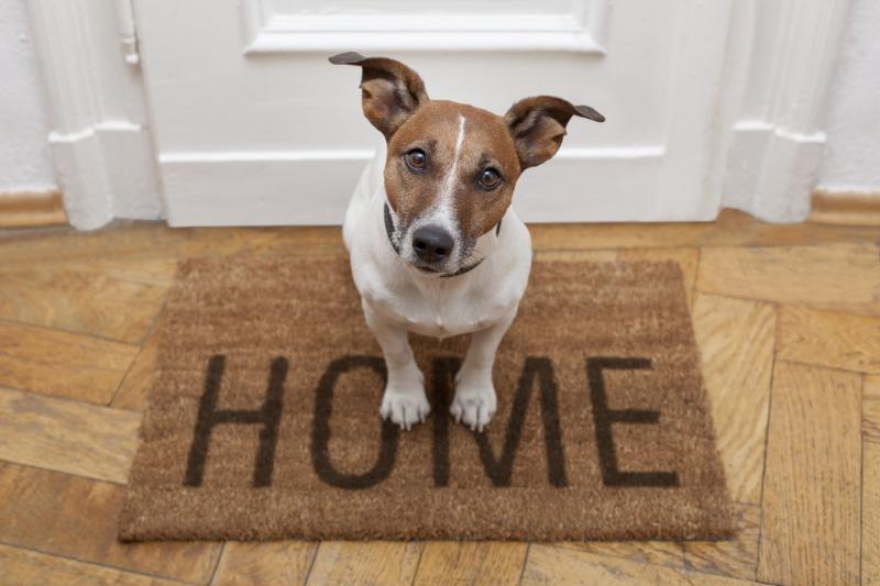 6 лайфхаков для владельцев собак, как сделать совместное проживание комфортным